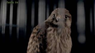 getlinkyoutube.com-اروع اغنية مغربية  تدمع العين  في 2016  khawla