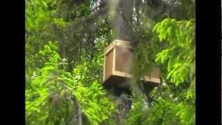 getlinkyoutube.com-Ловушка для пчёл. Установка.