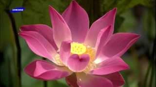 getlinkyoutube.com-Samsung - The beauty of nature flowers HD Trailer
