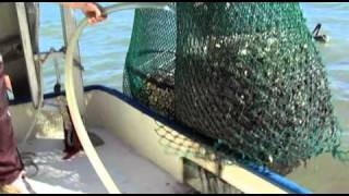 getlinkyoutube.com-The 50-50 Shrimp Boat
