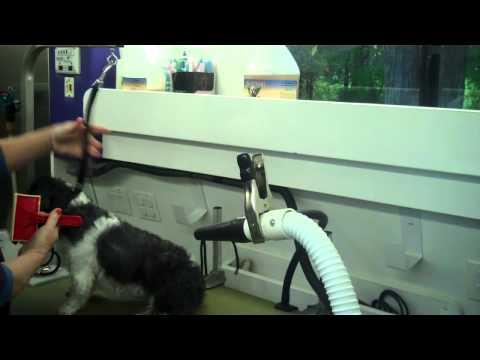 Dog Grooming in a Wag N Tails Mobile Grooming Van