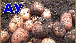 Выращиваем картофель в мешках часть 2