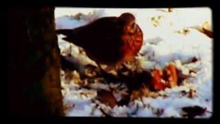 getlinkyoutube.com-moje zimowe spotkanie z ptakami 🐤 ❄ 📷