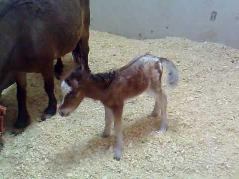 Pony Recien Nacida