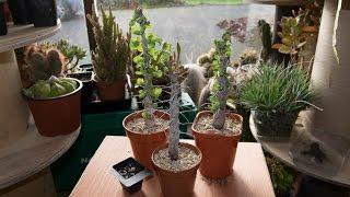getlinkyoutube.com-Potting up my Succulent Plants from Groovyman 1968