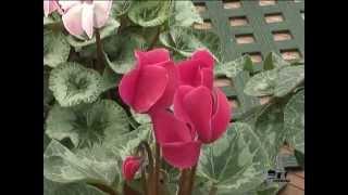 getlinkyoutube.com-El jardinero en casa | Plantas bulbosas