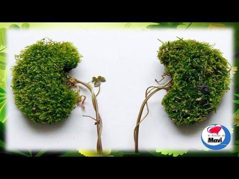 Las mejores plantas medicinales para limpiar los riñones de forma natural