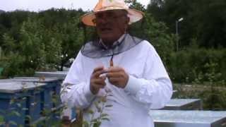 getlinkyoutube.com-Manastirea Tisa - Urgenta zilei este recoltarea botcilor gata de ecluzionat - apicultura video