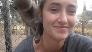 getlinkyoutube.com-Monkey Business at Twala Trust Animal Sanctuary - part 1