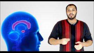 لية الإنسان بيكون متفائل؟ | why humans are optimists? #neuroscience