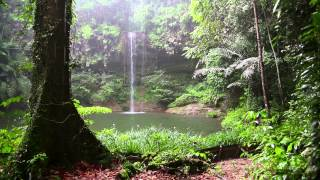 getlinkyoutube.com-Rain Sound and Rainforest Animals Sound - Relaxing Sleep