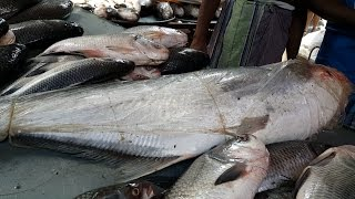 getlinkyoutube.com-Incredible Fish Aroth | Wholesale Fish Market Karwan Bazar Dhaka Bangladesh