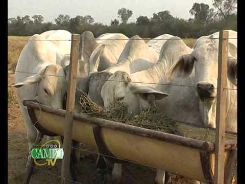 Confinamiento como estrategia de engorde del ganado.
