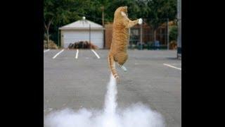 getlinkyoutube.com-farting cats? FUNNY