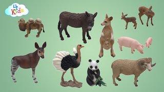 getlinkyoutube.com-Viele Schleichtiere mit Ihren Tiernamen und Tiergeräuschen lernen für Kinder