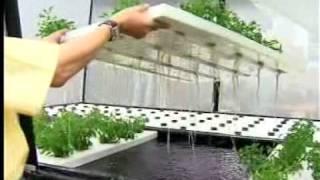 getlinkyoutube.com-โรงเรือนปลูกผักไฮโดรโปรนิก.avi