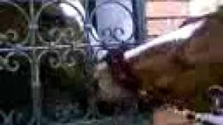 XXL porno animal ( chevale)  by ihab-tetouan y badr-bik