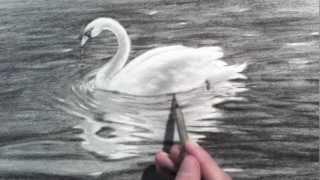 getlinkyoutube.com-Drawing a Swan - Time Lapse