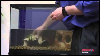 getlinkyoutube.com-How to Set Up a Freshwater Aquarium (Petco)