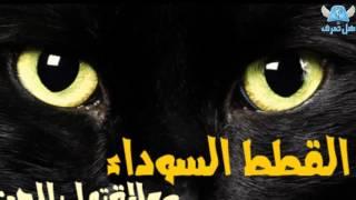 getlinkyoutube.com-هل تعرف ما هي علاقة القطط السوداء بالجن