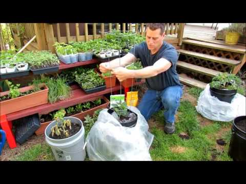 A Quick Hot-House Cage for Container Tomatoes & Peppers: A 5 Gallon Set Up for Faster Growth!