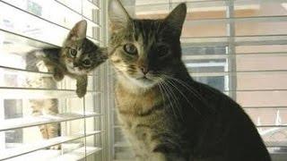Amor de Madre! Los mejores Videos de Mamás Gato y sus Hijos. Muy tierno