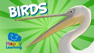 Birds | Educational Video for Kids
