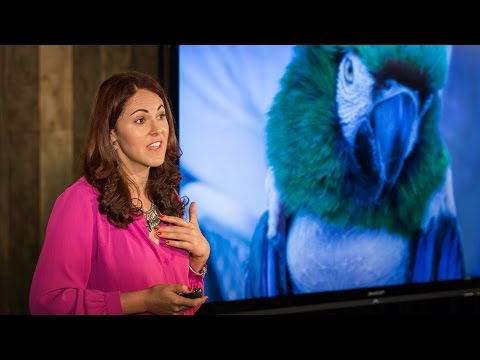 Depressed dogs, cats with OCD -- what animal madness means for us humans | Laurel Braitman - YouTube