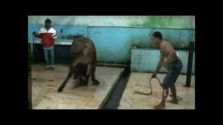 getlinkyoutube.com-animaux maltraiter