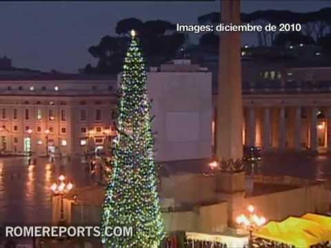 Ukraine gifts a Christmas tree to the Vatican