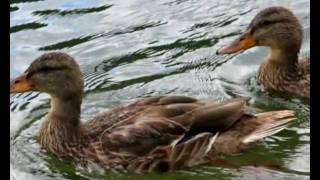 getlinkyoutube.com-Speech training for kids - Animals -تعليم الكلام للأطفال باللهجة المصرية- الحيوانات