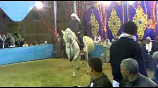 getlinkyoutube.com-رقص خيل الدولى كرم سرحان بحصان احمد الطويل2