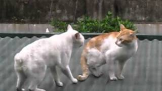 getlinkyoutube.com-CAT FIGHT!