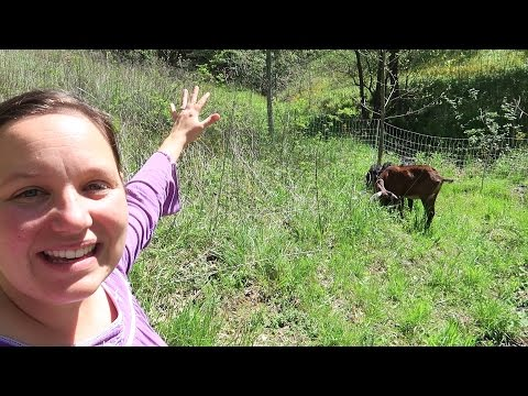 Permaculture Goats? | Putting Goats To Work Clearing Pasture