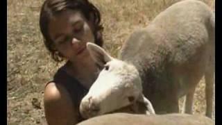 La Pasqua e gli agnelli