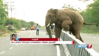 Wild elephant herd enters in to city near Coimbatore   News7 Tamil