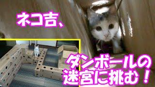 getlinkyoutube.com-ダンボールの迷宮を進む猫  Cat advance the labyrinth of cardboard