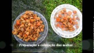 getlinkyoutube.com-Vídeo Filtro Artesanal para Água de Lagos e Açudes.wmv