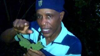 "getlinkyoutube.com-""The great benefits of stingy nettle"" - Grenada Herbalist  Patrick Delves"