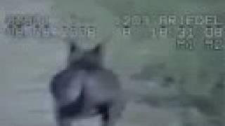 getlinkyoutube.com-Chupacabra on Cops Camera (closer view)