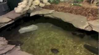 getlinkyoutube.com-Indoor Turtle Pond