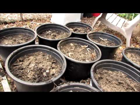 Organically Planting Tomatoes & Peppers,  Containers, Growth, Pests: Community Garden 2017 (2)
