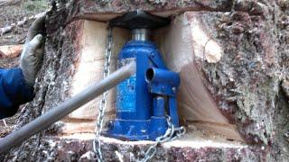 getlinkyoutube.com-Holzeinschlag (Baumfällung)  mit  hidraulischer heber und Husqvarna 560 xp