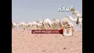 جديد 2014 | نخبة النخبة | مضيمات | منقية الشيخ / عمير بن فهد القحطاني
