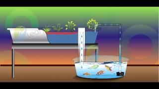 getlinkyoutube.com-Simple Flood and Drain Aquaponics System