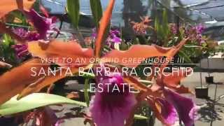 getlinkyoutube.com-Visit to an Orchid Greenhouse III -  SBOE Summer 2015
