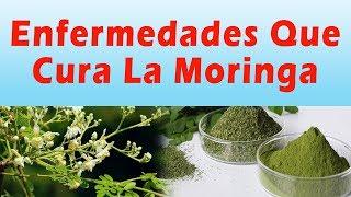 ENFERMEDADES QUE CURA LA MORINGA Para Que Sirve La Planta Moringa Beneficios y Propiedades
