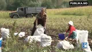 """getlinkyoutube.com-""""Ziua dorm, iar noaptea fură"""". De ce săracii sunt săraci"""