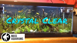 getlinkyoutube.com-How to keep crystal clear water in your aquarium