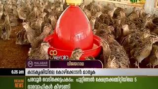 getlinkyoutube.com-Shameer's SPA Hatcheries - Kozhikode Model of Quail Farming